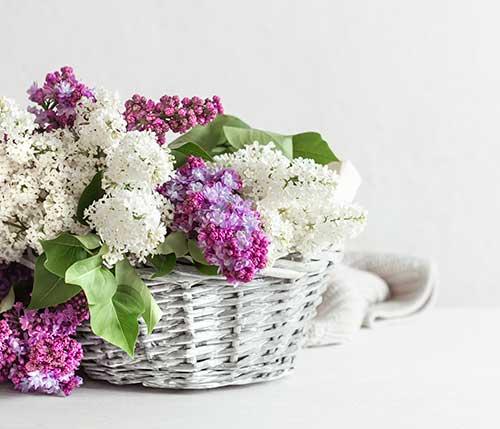 Cestas para Flores